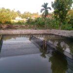 Persiapan Kolam dan Air Kolam sebelum Menebar Bibit Lele