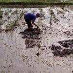Pencari Cacing Tanah