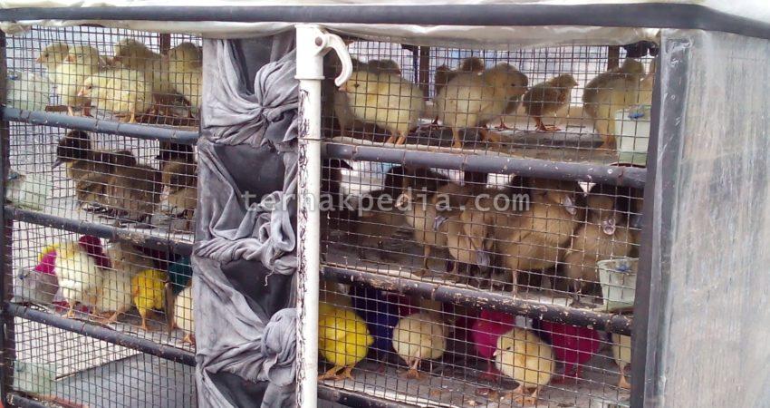 Di Daerah Sekitar Tempat Tinggal Saya Ada Salah Satu Pedagang Yang Menjual Bibit Ayam Dan Juga Bebek Sebagai Barang Dagangannya Biasanya Pangsa Pasar
