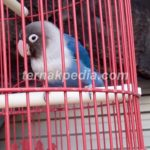 Proses Perawatan dalam Memandikan Burung yang Unik