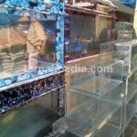 Cara Membersihkan Lumut, Kerak, dan Jamur pada Aquarium