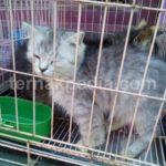 Harga Paket Grooming dan Paket Penitipan Kucing