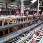 Beternak Ayam Petelur dalam Skala Kecil yang Menguntungkan